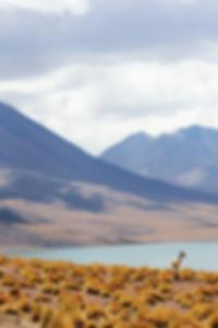 ثونغ حلو الصورة السوداء