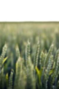 جريج freidler صور عارية لاس فيغاس