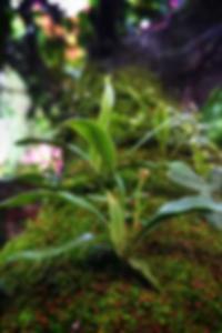 صور كبيرة الحمار الساخنة