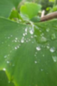 مصباح التنين البرونزية الصينية خمر